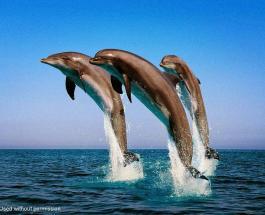 Животные с необычными способностями: кто умеет ходить по воде