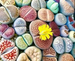 Необычные комнатные цветы: топ-7 невероятно красивых растений для дома