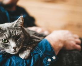 От чего зависит характер кошки: ученые доказали взаимосвязь между хозяином и питомцем