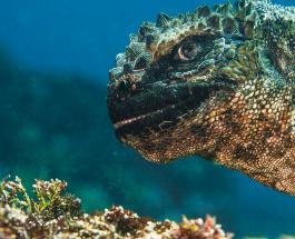 Топ-20 впечатляющих фото морских животных завоевавших престижную награду в Британии
