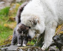 Крепкая дружба собак и кошек: подборка забавных и милых фотографий животных