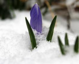 10 интересных фактов о людях рожденных в марте