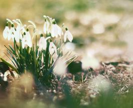 Гисметео Украина: погода на 11 марта - сухо будет только на Юге страны
