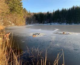 Чудесная история спасения собак: 45-летний мужчина не побоялся войти в покрытое льдом озеро