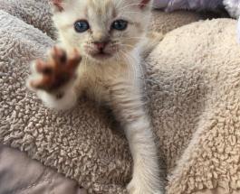Счастливый случай помог котенку с парализованными лапками попасть в заботливую семью