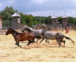 В Парке Киевская Русь состоится конное шоу