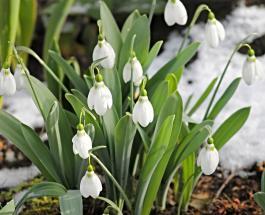 Гисметео Украина: погода на 28 марта - в некоторых регионах пройдет мокрый снег