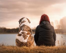 Реакция собаки на болезнь хозяина: ученые о взаимосвязи между человеком и его питомцем