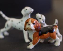 Лучшие породы собак для маленьких квартир: топ-5 домашних животных с отличным характером