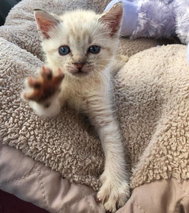 спасенный котик