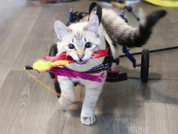 кот спасенный