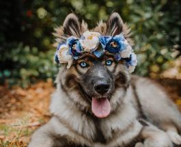 Милые фото животных: девушка создает цветочные обручи для питомцев