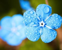 Гисметео Украина: погода на 11 апреля – ожидаются дожди с грозами