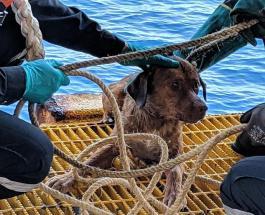 Чудесное спасение собаки в 200 км от берега бурно обсуждают в Сети