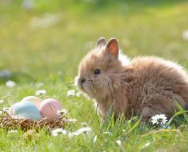 Пасхальный заяц: почему его считают символом христианского праздника
