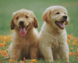 Фото животных: забавные кадры доказывающие что собаки умеют дружить
