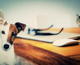 Как избавиться от запаха мочи домашних животных