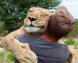 Фото животных которые любят объятия больше чем люди
