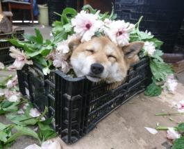 Собаки у которых есть настоящая работа: фото питомцев-трудяг