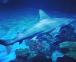 Дайвинг с акулами за 650 долларов: экстремальный туризм в Северной Америке