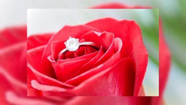 роза серебро