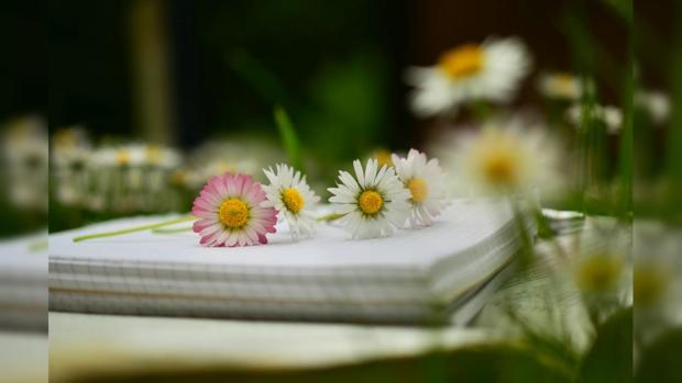 цветы блокнот