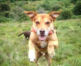 Скрещенные породы собак: милые фото которые никого не оставят равнодушным