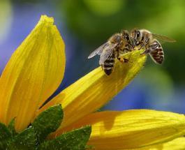 Пчелиный рой чуть не сорвал матч Кубка по крикету в Англии