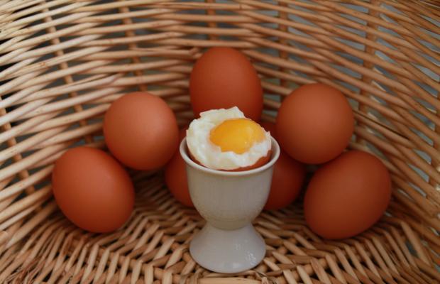 яйца характер