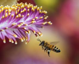 Рой пчел на улицах ирландского города Лимерик вызвал панику у местных жителей