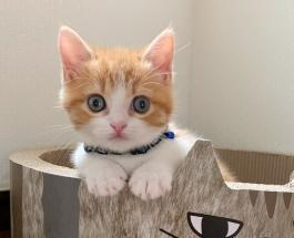 Рыжая звезда Инстаграма: котенок прославился благодаря любимой позе для сна