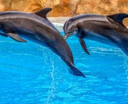 23 июля в истории: Всемирный день китов и дельфинов и юбилей Дэниела Рэдклиффа