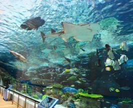 Уникальный аквариум на высоте 2200 метров откроется в Китае: новый туристический объект