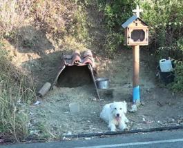 Собачья верность: пес 18 месяцев живет на трассе где погиб в ДТП его хозяин