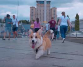 Корги показал туристам Киев: КГГА создала креативное видео с сюжетом