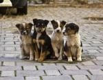 Всемирный день бездомных животных: цель и миссия важной даты