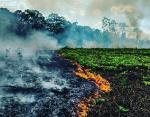 Пожары в лесах Амазонки: президент Бразилии высказался о произошедшей катастрофе