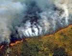 За минуту сгорает футбольное поле: неутешительная правда о страшных пожарах в Бразилии