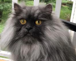 """Смешные фото животных: новой звездой Сети стал кот Джуно с самым серьезным """"лицом"""""""