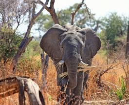 Запрет на продажу слонов в зоопарки – победа экологов в борьбе за исчезающие виды животных