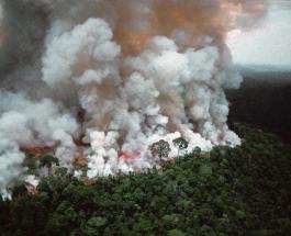 Пожары в Бразилии – не самые масштабные в мире: НАСА показало охваченные огнем земли Африки