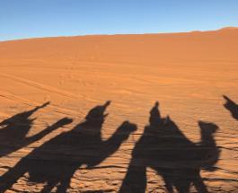 Новый гибрид верблюдов: в Казахстане вывели уникальный вид животных