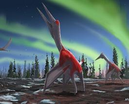 Палеонтологи показали как выглядел птерозавр живший на Земле более 77 млн лет назад