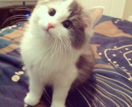 Кот которому можно только позавидовать: жизнь питомца Гэри похожа на сказку