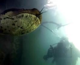 Подводная прогулка с гигантской анакондой: в Бразилии сняли удивительный видеоролик