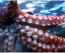 Мастер камуфляжа: на видео сняли осьминога меняющего цвет во время сна