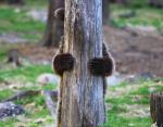 Мишка играет в прятки