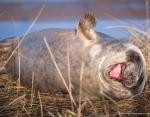 Этот тюлень казался невероятно счастливым во время обеденного сна