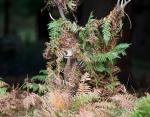 Для оленей нет ничего странного в том, чтобы зарыться в листву или запутаться в ветках, но этот олень превзошел всех своих сородичей