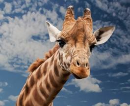 Международный день животных: по чьей инициативе важная дата внесена в календарь праздников